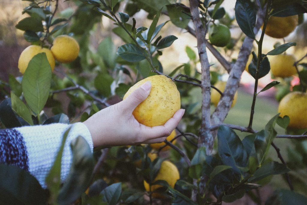La main d'une femme tenant un citron dans la main